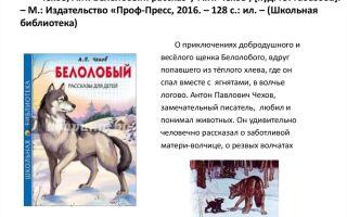 Сочинение анализ рассказа белолобый чехова